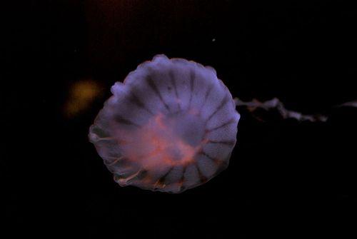 Jelly5