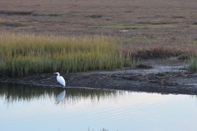 Egret at the edge of the Lagoon