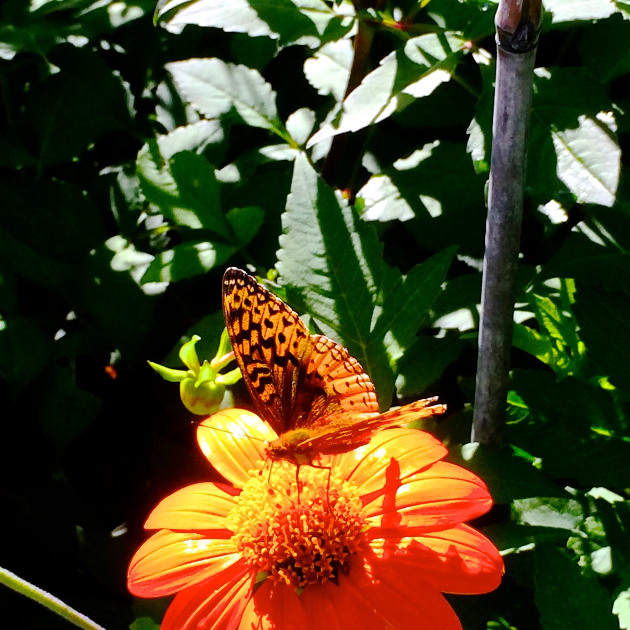 I Only Had My Cell Phone With Me When I Visited A Few Days Ago U2013 However I  Tried To Capture The Glory Of This Garden With Some Snapshots Of The  Butterflies ...