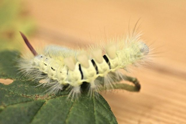 mothcat2